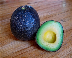 California Gem Avocado - 4 Pound Box